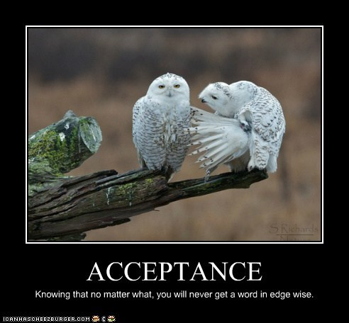 acceptance,argument,husband and wife,marriage,owls,quiet,talking