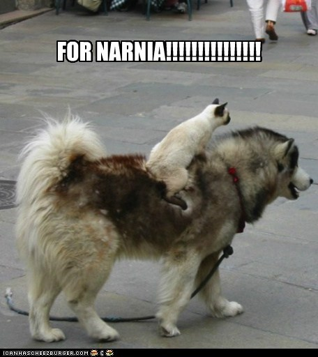 cat dogs narnia - 6013723136