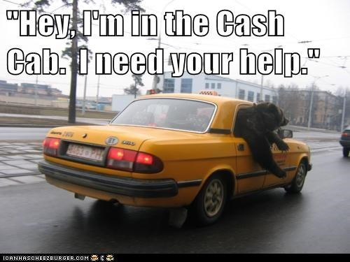 bear,bears,cabs,cash cab,game show,help,question,shout out,street,taxi,taxis