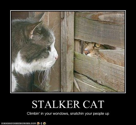 STALKER CAT Climbin' in your wondows, snatchin your people up
