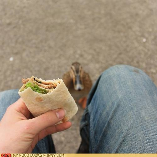 beggar,bird,duck,lunch,outside,SOON,wrap