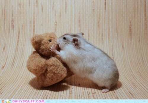 friend hamster hamsters KISS kissing love teddy bear toy toys