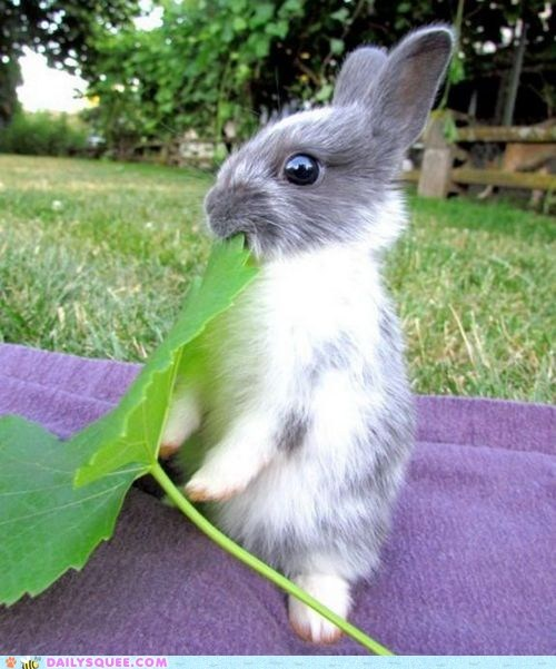 blanket bunny eat leaf grass - 6013873152