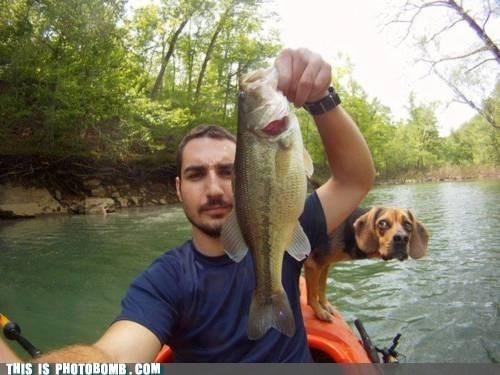Animal Bomb animals dogs fish fishing hungry - 6013948928