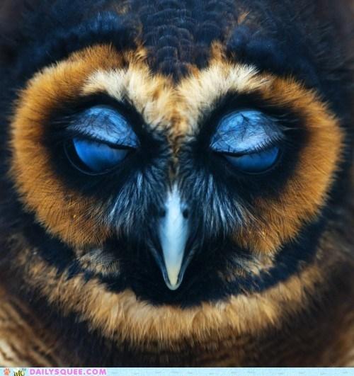 birds creepicute eyes face Owl owls squee wise - 6014336512