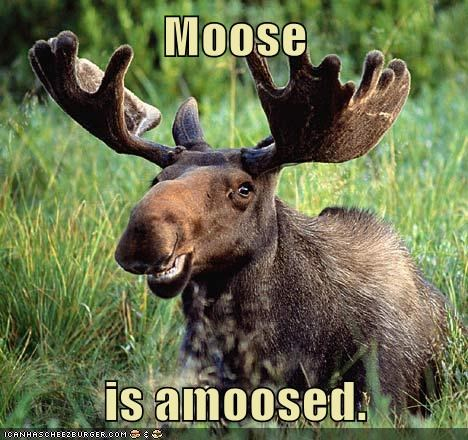 amused,happy,moose,pun