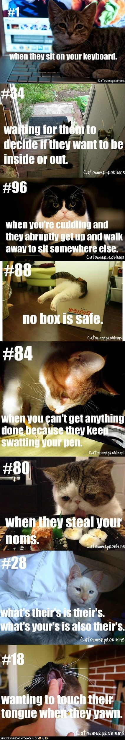 cat owner problems,cat owners,Cats,complaints,Hall of Fame,multipanel,owners,problems