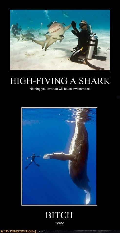 amazing,Pure Awesome,shark,whale,wtf