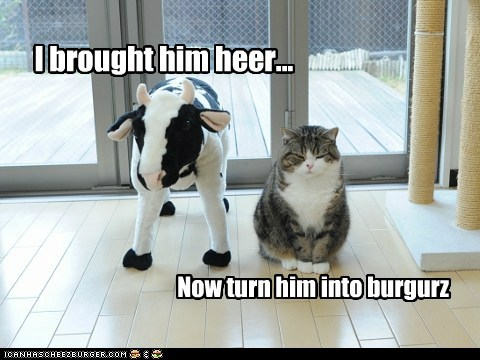 best of the week burger Cats cheezburger cheezburgers cow Hall of Fame into maru request stuffed animal turn - 6014584832