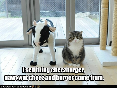Cheezburger Image 6014624000