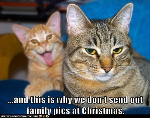 caption Cats christmas christmas cards crazy dont family pictures relatives send this why - 6014671872