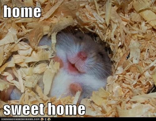 cozy hamster home house safe sleep