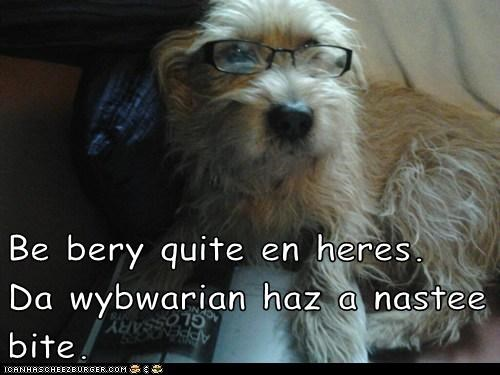 dogs funny glasses what breed - 6015600896