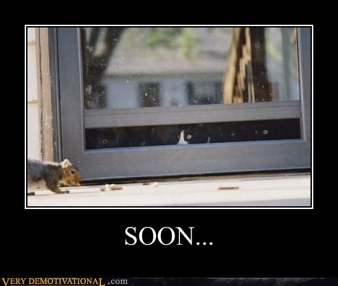 Cats hilarious SOON squirrel - 6015872256