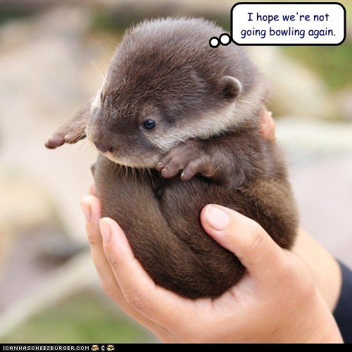 ball,balls,bowling,caption,exercise,hands,otter,otters,sport