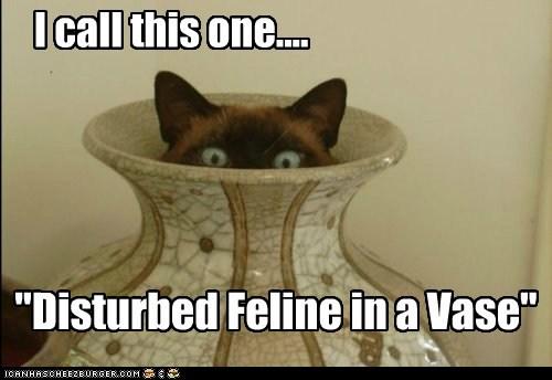 art best of the week Cats creepy feline Hall of Fame peeking performance siamese vase - 6016306176