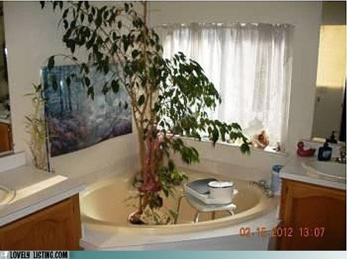 bath tub bathroom plant stool tree tub
