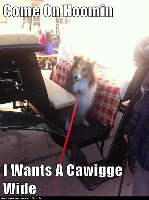 collie cyoot dogs funny - 6016891904