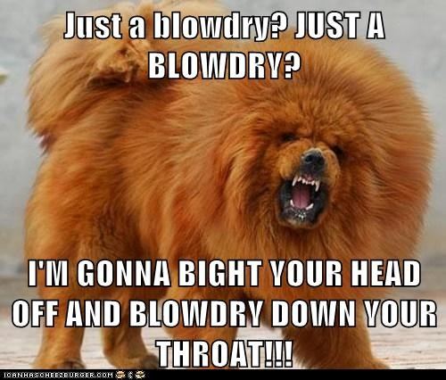 Just a blowdry? JUST A BLOWDRY?  I'M GONNA BIGHT YOUR HEAD OFF AND BLOWDRY DOWN YOUR THROAT!!!