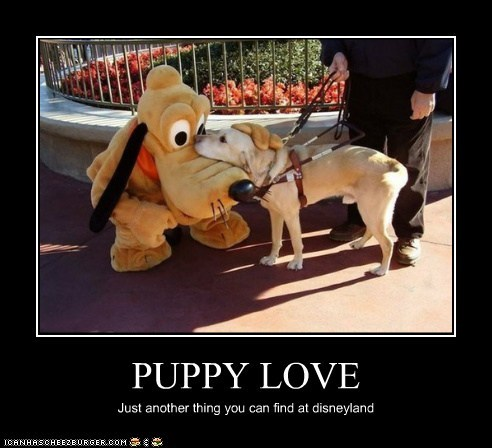 PUPPY LOVE Just another thing you can find at disneyland