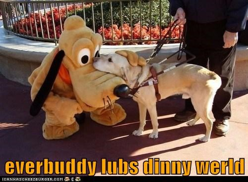best of the week caption characters costume disney disney world dogs Hall of Fame love pluto