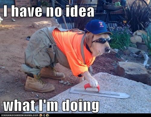 construction dog dogs golden retriever no-idea-what-im-doing - 6017447680