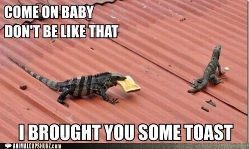 iguana lizard love romance woo - 6017940480