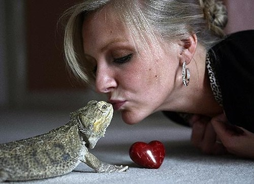 bearded dragon,chemotherapy,george the dragon,lucky lizard,Photo