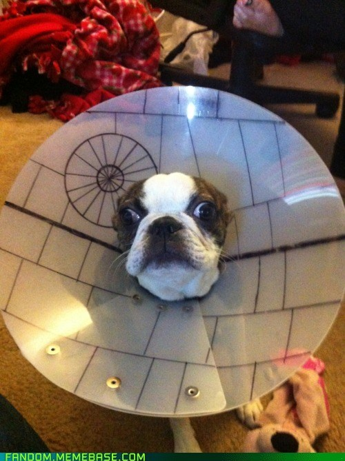 cone dogs It Came From the Interwebz star wars - 6018644224