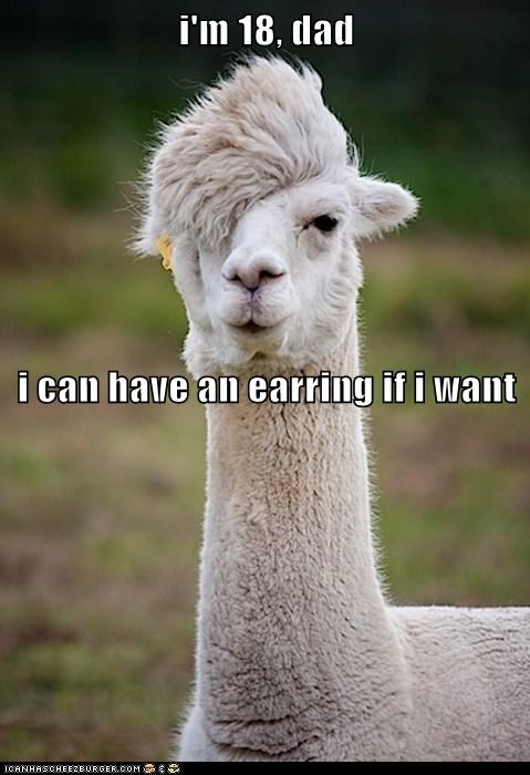 arguing dad Earring emo hairstyle kids llama llamas teenagers - 6018692608