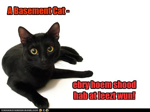 A Basement Cat -