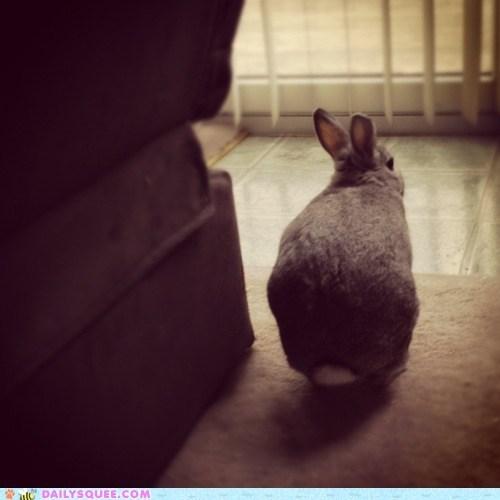 back bunny grumpy rabbit