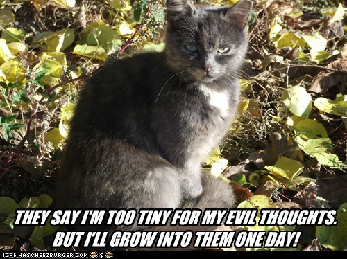 evil grow Growing kitten promise thoughts tiny will - 6018980096