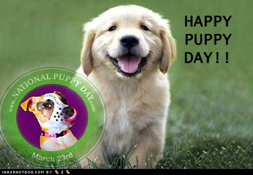 cute cyoot dogs holidays National Puppy Day puppy