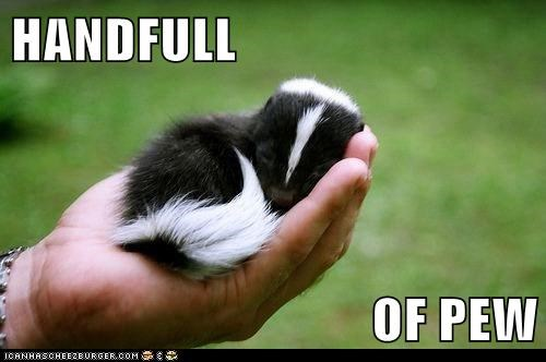 cute,gross,Other Animals,poop,skunk,smell,squee