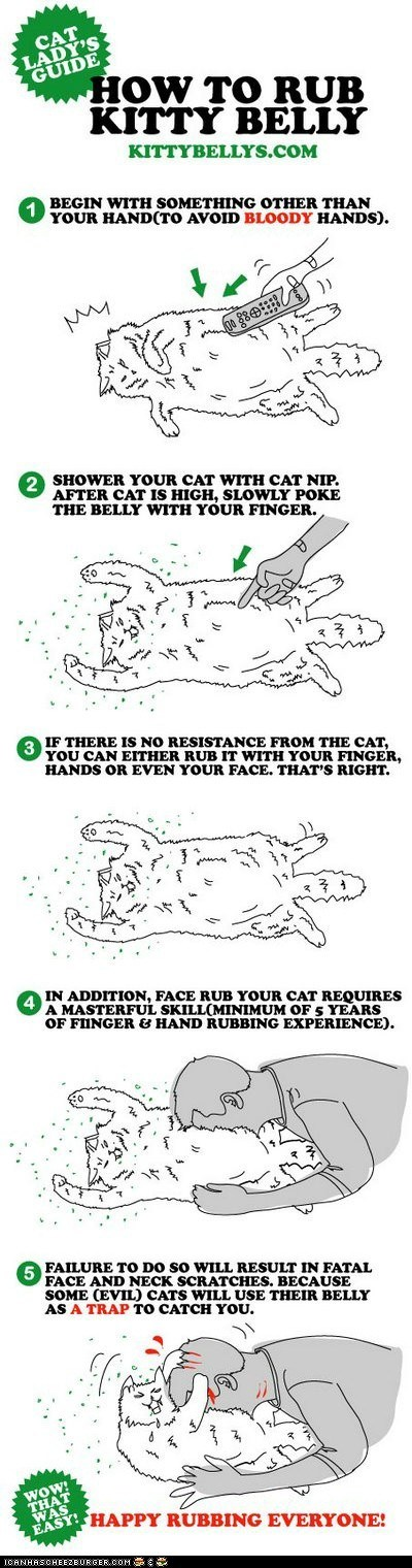 belly Cats guide How To pet petting rub rubbing stomach tummy - 6019540992
