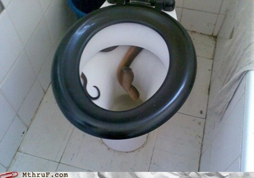 asia bathroom hidden snake southeast asia surprise toilet