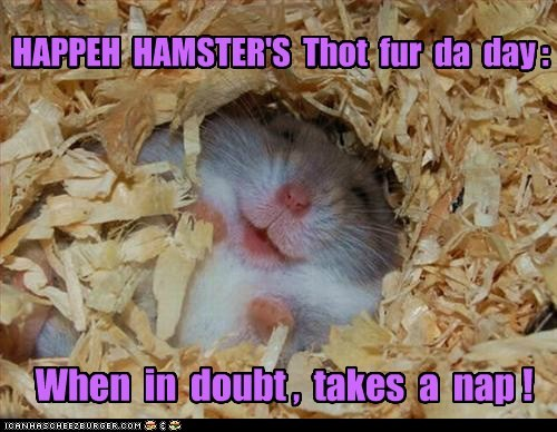 HAPPEH HAMSTER'S Thot fur da day : When in doubt , takes a nap !