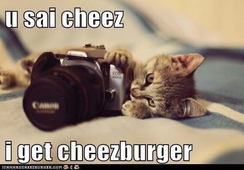 Cheezburger Image 6020527872