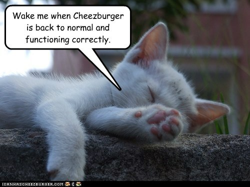 sleepy kitteh wants normal back