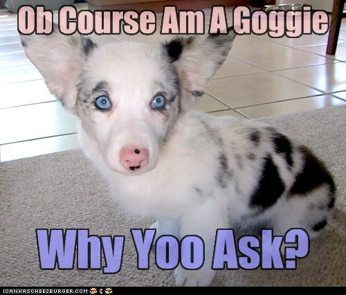 And what iz dis Kyoot yoo speak of? Ob Course Am A Goggie Why Yoo Ask?