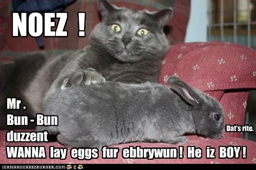 NOEZ ! Mr . Bun - Bun duzzent WANNA lay eggs fur ebbrywun ! He iz BOY ! Dat's rite.