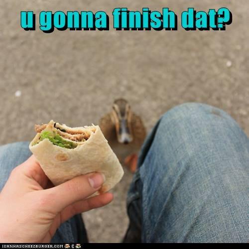 annoying burrito ducks eating food you gonna eat that - 6022031872