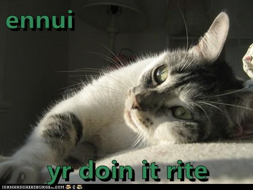 doing it right ennui Sad sadcat Staring - 6022181376