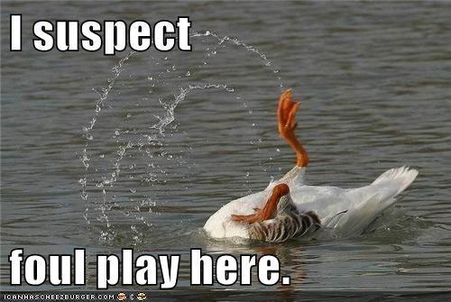 bird flip fowl goose murder pun water - 6022446080