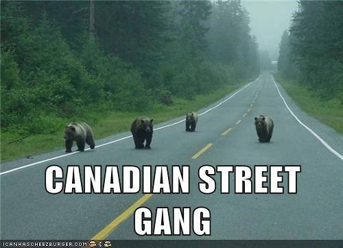 bear bears Canada danger fight forrest gang gangs kids road street gang - 6022703360