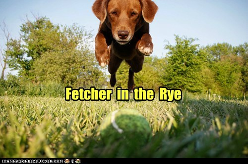 ball balls books catcher in the rye dogs jumping literary reference literature what breed