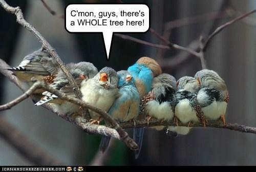 birds cmon crowd good spot sharing tree whole - 6023552256