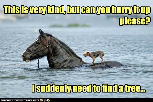 bathroom cross dogs horse pee ride river urine water - 6023711232