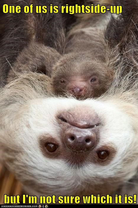 baby child hang kid mom not sure sloth slow upside down - 6023802368